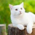 猫が蚊に刺された時の症状と注意点