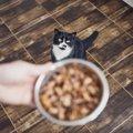【新型コロナ】愛猫のフードや医療ケア用品…物資不足への不安対策