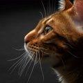 猫は賢いとされる理由