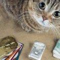 猫のパスケース(定期券入れ)かわいくておすすめな商品24選