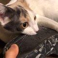 お気に入りのスリッパを捨てられたくない猫ちゃん