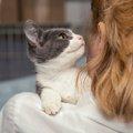 猫の捕獲器(罠)3選!安全に保護する方法とコツ