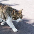 猫の歩き方の特徴と歩行異常について