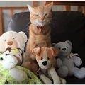夜な夜なぬいぐるみを家に持ち帰る猫が話題に!