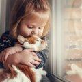 絶対にNGな猫の『抱き方』5つ