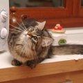 猫を電子レンジでチンした訴訟とその本質とは
