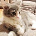 猫が遊んでほしい時にする仕草5つ