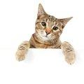 保健所にいる猫の引き取り方と注意すべきこと