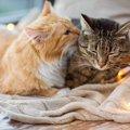 猫を多頭飼いする人は意外に多い…2匹目をお迎えする時の注意点とは?