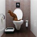 猫がトイレでしない!粗相してしまう原因と対策
