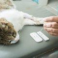 猫エイズの検査の方法と掛かる費用
