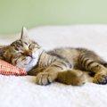 猫が発熱した時の対処法や原因と症状