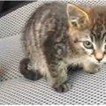 道路の真ん中で動けないでいた子猫、その理由は驚くべきものだった!