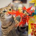 LAYLAの12猫占い【11/9~11/15】のあなたと猫ちゃんの運勢