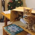 飼い主さんと一緒に掃除機の組み立てに参加する猫さん♪