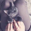 猫の腎臓病とはー原因や症状、治療法について