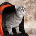 猫のポータブルトイレのおすすめ人気ランキング6選、選び方や使う状況…