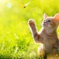 猫がペットに向いている理由と初心者さんが飼いやすい猫の3品種