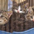 致死率はほぼ100%の恐ろしい病気「猫パルボウイルス感染症」