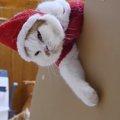 クリスマスは大忙し!のハズが…。猫サンタ、職務放棄!?