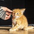 『猫にしてはいけない撫で方』3選!間違ったNG行動がストレスに繋が…