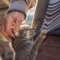 愛猫との思い出作りに!願いを叶えてくれる『#withlist』キャンペーンに応募してみよう