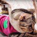 テントって楽しいニャ♡夢中になって遊び続ける猫ちゃん!