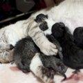 母猫が育児放棄する理由と対処法