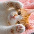 猫が手を「グーパー」している時の5つの気持ち