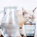 猫にミネラルウォーターを与えるのは危険!病気になることも?