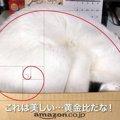 『黄金比』無理矢理箱に入る猫が芸術的