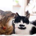 猫の耳掃除でやってはいけない『NG行為』5選