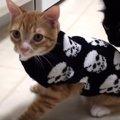 人気保護猫コンビによる楽しいハロウィンのすすめ