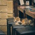猫がいる居酒屋3選!アクセス方法や守りたいマナー