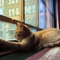 猫が網戸を登って脱走してしまうことの3つの対策