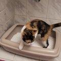猫がウンチやおしっこを隠す理由と、砂の散乱の対処法