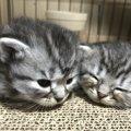 【今日のねこちゃん】『子猫の写真』を大募集!