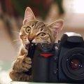 猫の写真を上手に撮る方法は?コツも含めてご紹介!