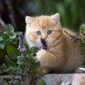 死に至ることも…!猫を絶対近づけちゃダメな『秋の花』4選