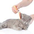 猫のブラッシング用品  それぞれの特徴と選び方