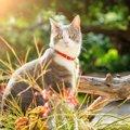 猫のノミ取り首輪は効果ある?使う時に注意する事や駆虫の方法