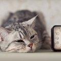 猫の生活リズムは夜型?一緒に暮らす上で気をつけたい4つの事
