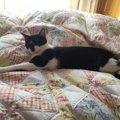 愛猫は保険入ってる?ペット保険のメリットや注意点と加入しない場合…