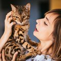 普通の猫と『大型猫』にはどんな違いがある?4つの違う所