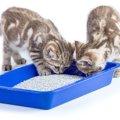 猫砂の飛び散りを防止する4つの方法、おすすめ商品