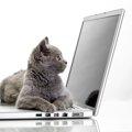 オス猫の名前の人気ランキングで流行をチェック!