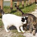 猫を去勢させる時期や手術を受けるメリット、費用まで
