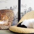 座椅子に座ってまったり♪まるで人のようにくつろぐ猫たち