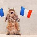 猫をフランス語で言うと?人気の名前や暮らし方