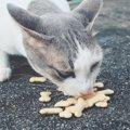 猫がカルシウムを摂れる3つの食べ物と与え方